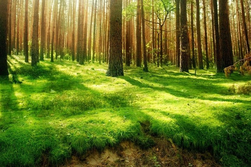 Beautiful forest trees sunshine wallpapers golf nature wallpaper green  forests grass light