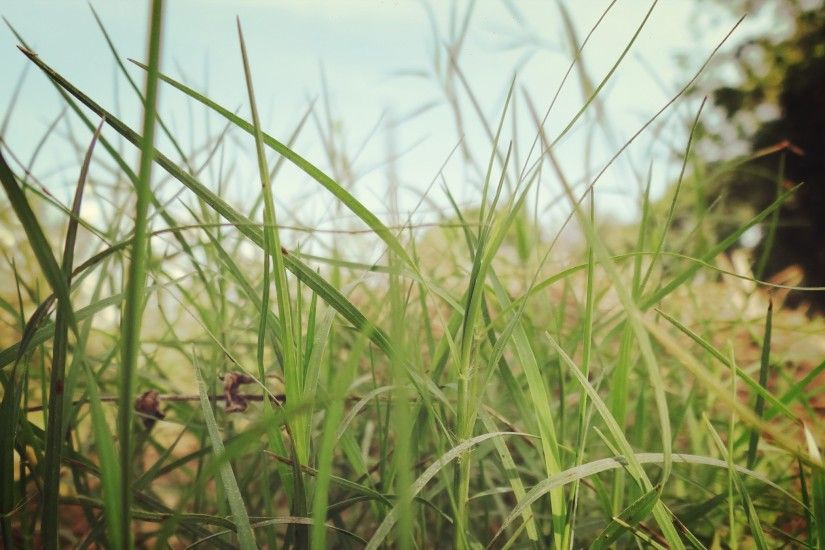 Beautiful-Green-Grass-HD-Wallpapers,-Grass,-Green,