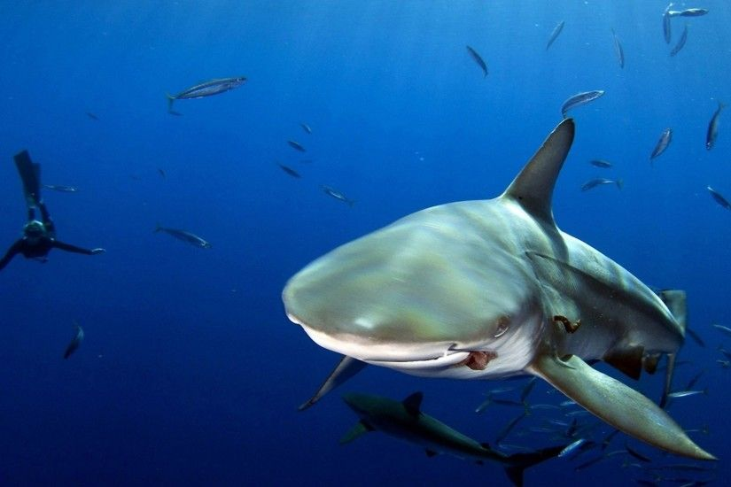 ... ocean shark water fish scuba diver depth desktop wallpaper hd ...