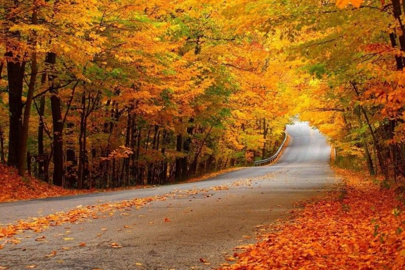 Trees Seasons Landscapes Fall Nature Leaves Colors Roads Autumn Forest 3D  Wallpaper Free Download For Mobile