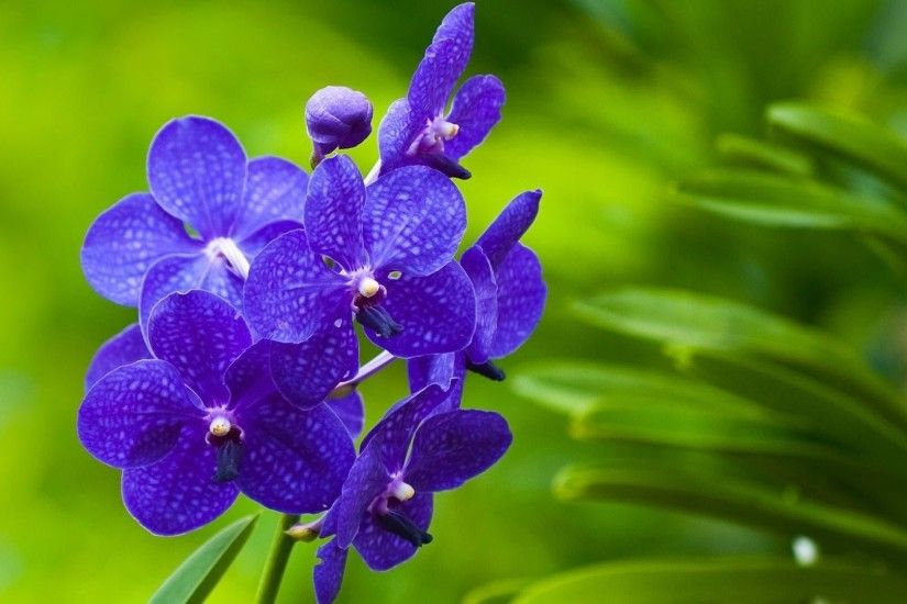 5. pictures-of-purple-flowers5-600x338