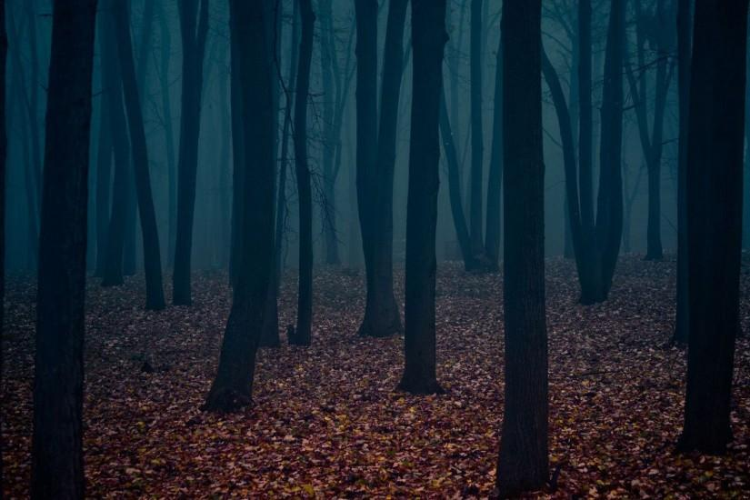 free download dark forest wallpaper 1920x1080 for windows
