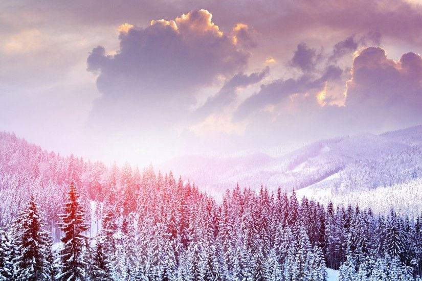 Winter Landscape Of Snow Forest Wallpaper