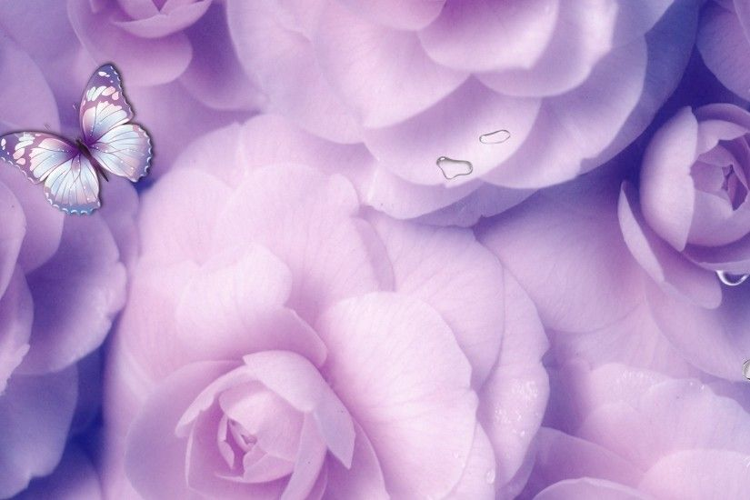 Lavender Flower Background HD | HD Lavender Roses Wallpaper