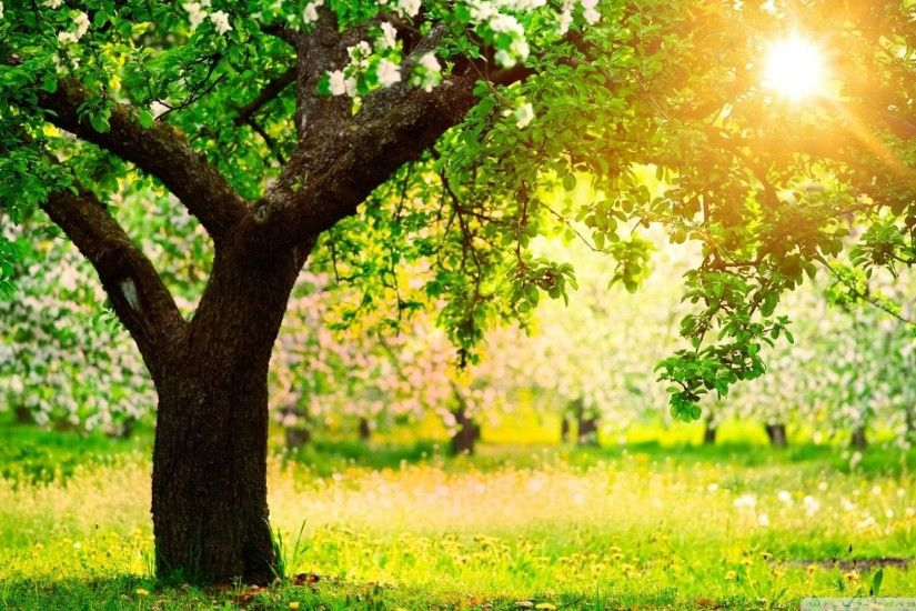 Wallpaper trees sunny spring day 1920 x 1080 full hd
