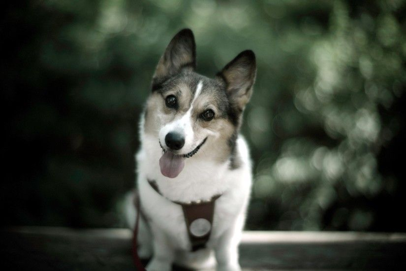 Cute Dog Photo wallpapers and stock photos