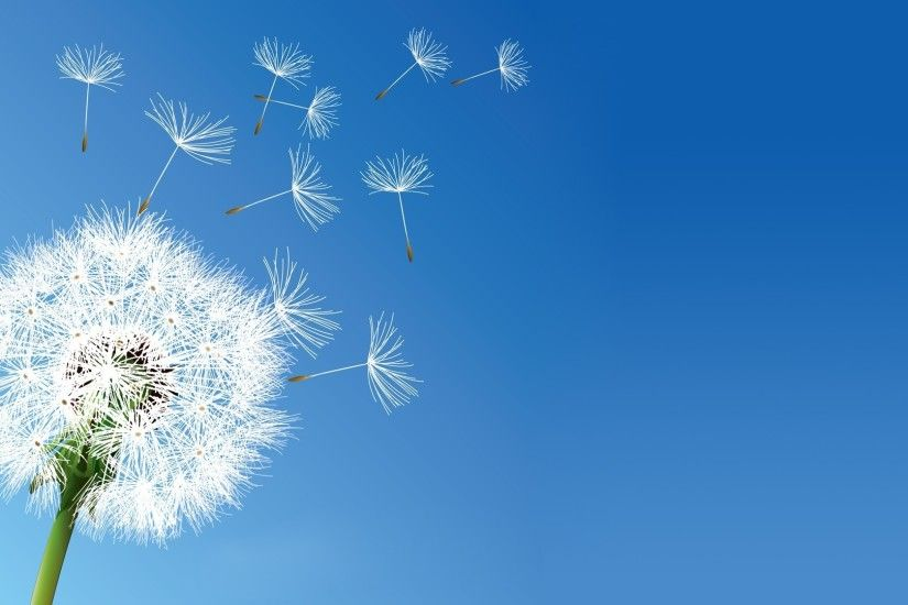nature, Flowers, Dandelion, Clear Sky Wallpapers HD .