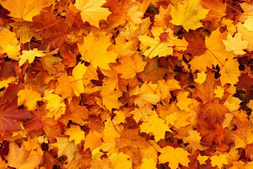 fall backgrounds tumblr www
