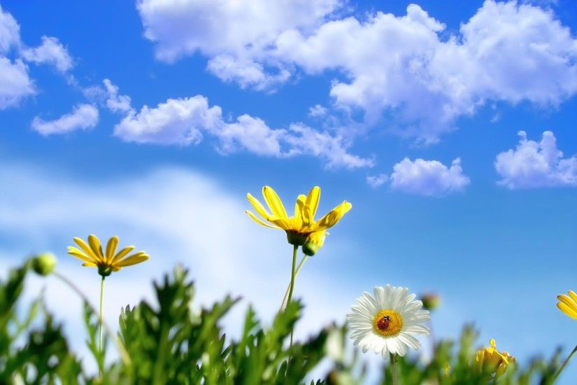 clouds, sky, flowers, spring background