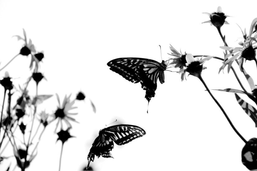 1920x1200 Black and red butterfly Wallpaper #