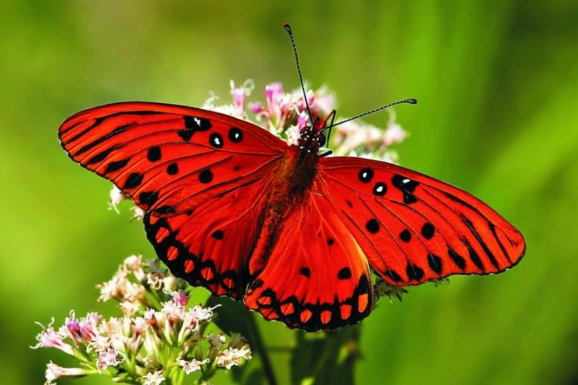 Beautiful Colorful Butterfly HD Wallpaper and Photos in hd 1080p