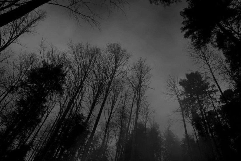 Image - Forest-black-white-dark-forest-wallpaper.jpg –