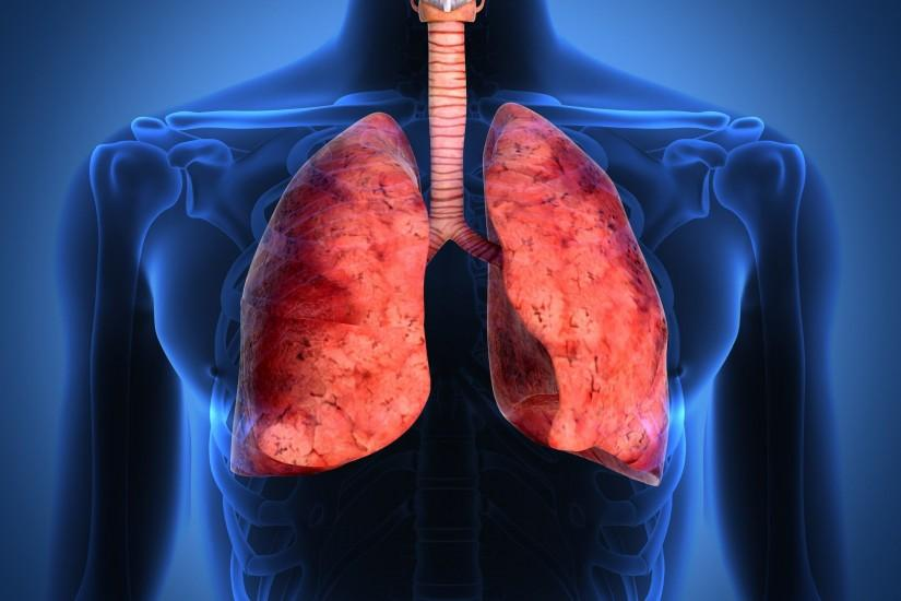 Human Lungs Biology Wallpaper