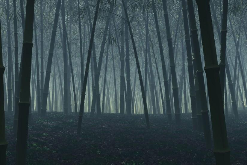 dark forest background 1920x1200 picture