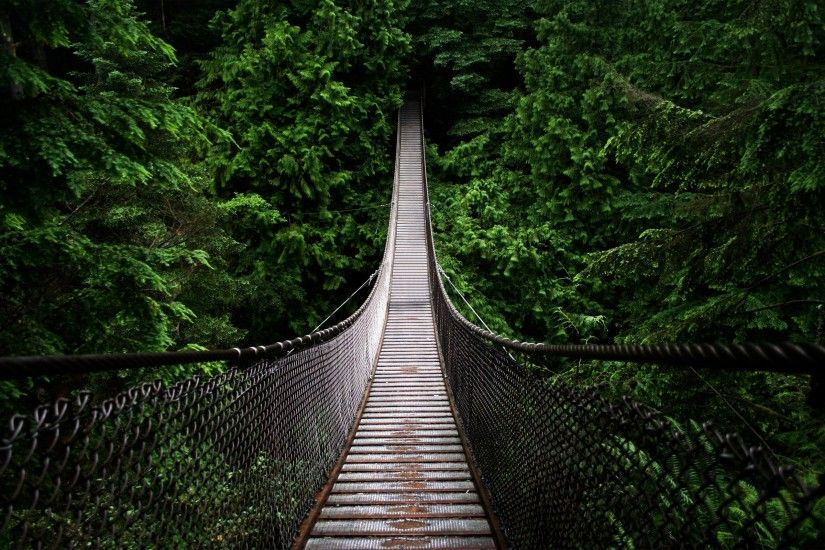 Dense Forest Bridge Wallpaper In Resolution Free Wallpapers