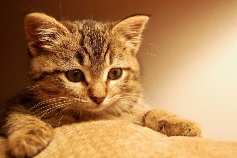 1920x1080 cute Kitty background wallpaper wide wallpapers:1280x800,1440x900,1680x1050  - hd backgrounds