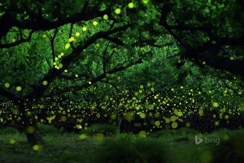 wallpaper.wiki-Fireflies-Wallpapers-HD-PIC-WPB004789