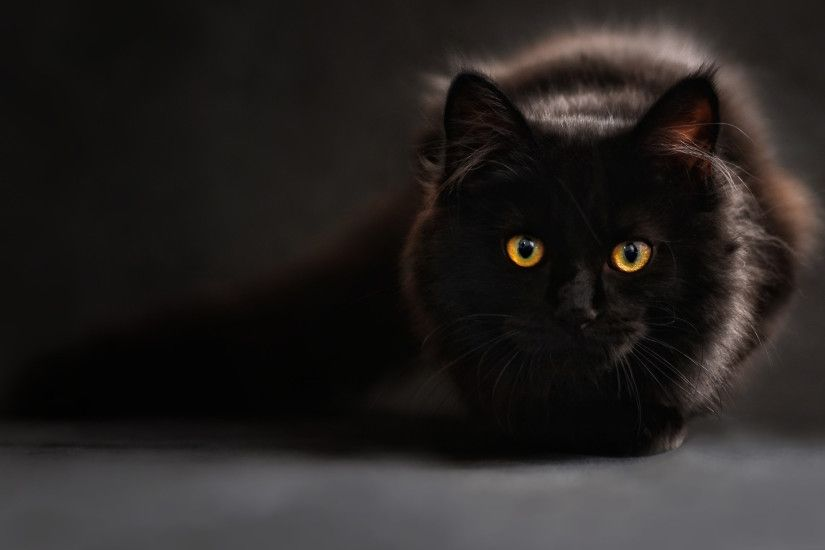 Black Cat Wallpaper - HD Wallpapers Backgrounds of Your Choice