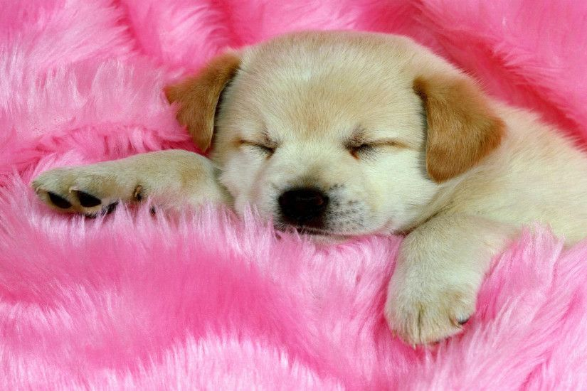 Lovely Dog Wallpaper Sleep Cute #10481 Wallpaper | Walldiskpaper In  Addition To Cute Dog Wallpaper Images