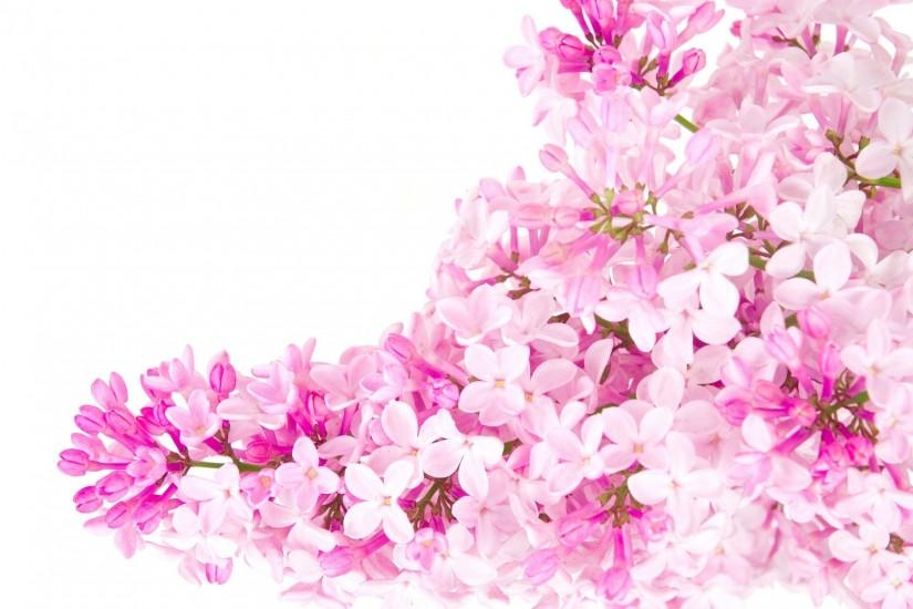 Pink flowers - Pink (Color) Photo (23830799) - Fanpop