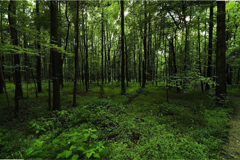 dark-green-forest-background-2