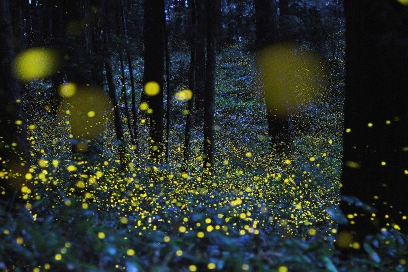 wallpaper.wiki-Fireflies-Photos-Download-PIC-WPB004804