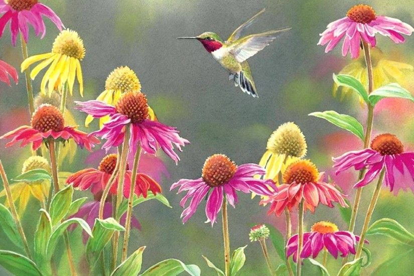 Hummingbirds in the flowers - Birds & Animals Background .