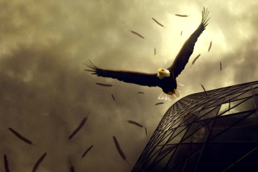 Stunning Eagle Flight Wallpaper | HD Animals and Birds Wallpaper Free  Download ...