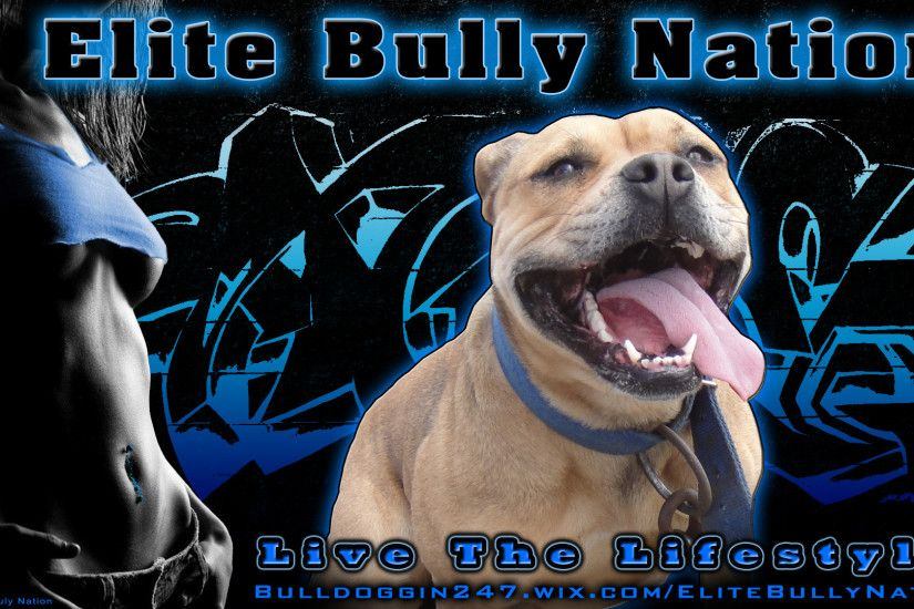 High Definition Pitbull Wallpaper