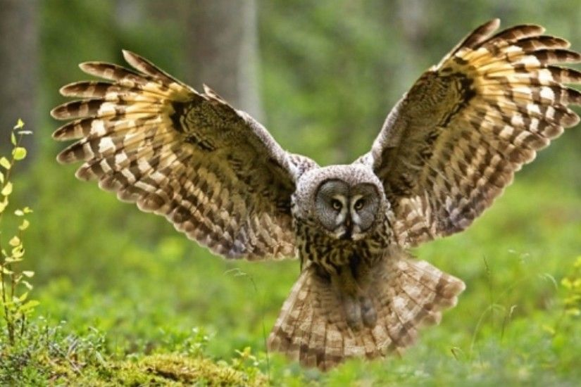 530 Owl HD Wallpapers | Backgrounds - Wallpaper Abyss - Page 16