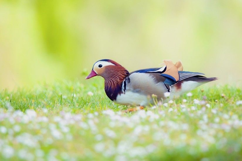 ... Desktop Wallpapers - THIS Wallpaper Nature And Birds Wallpaper  Background 1 HD Wallpapers | car .