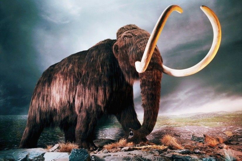 Woolly Mammoth HD Wallpaper