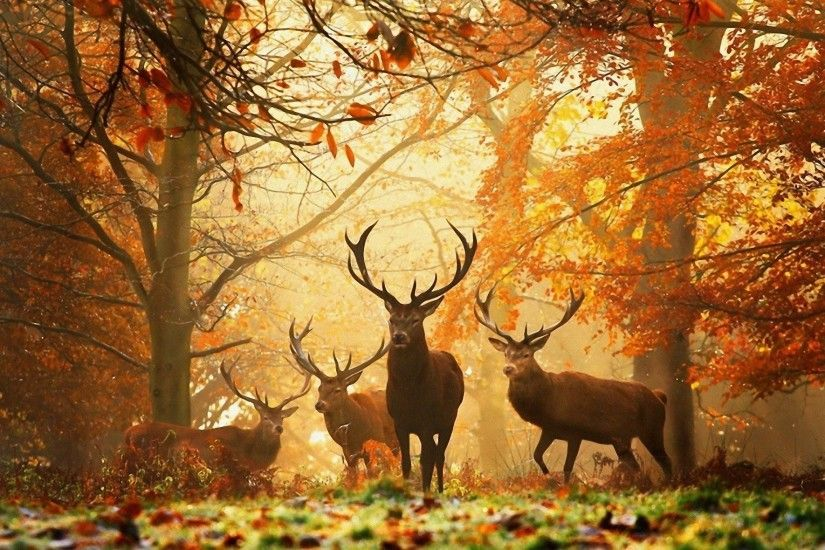 whitetail deer wallpaper free Android Apps on Google Play