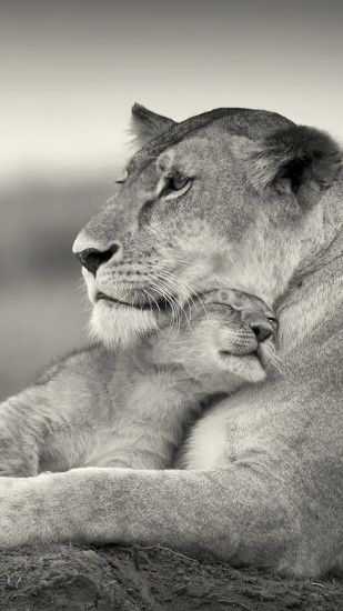 1080x1920 Wallpaper lion, couple, wool, cub, black and white