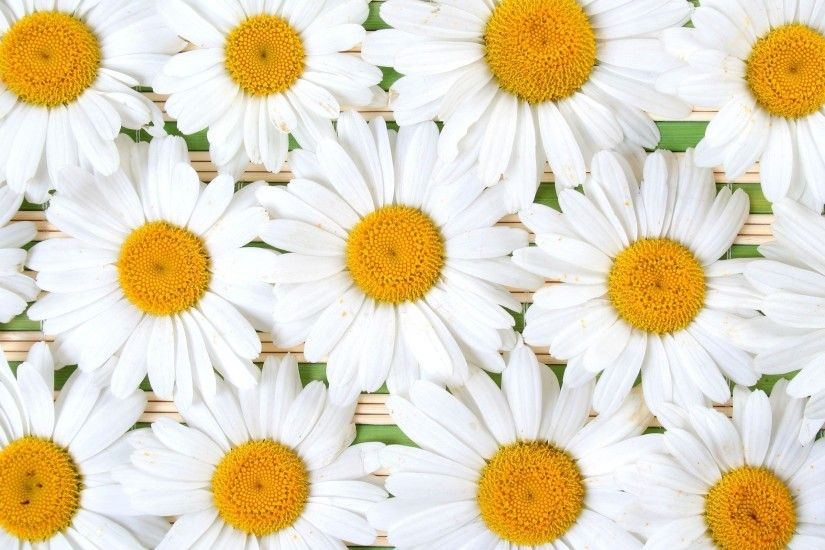 Earth - Daisy Wallpaper