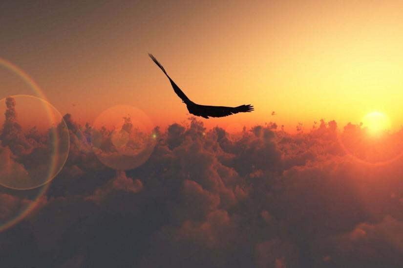 Animal Eagle Silhouette Above The Clouds Wallpaper.