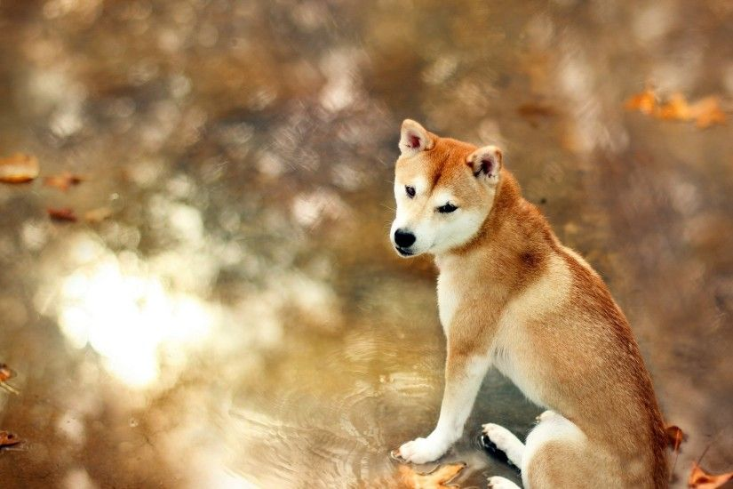 dog wallpaper lovely. Â«Â«