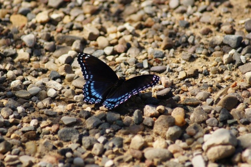 #2312x1536 butterfly gravel black butterfly and insect hd wallpaper and  background #58244