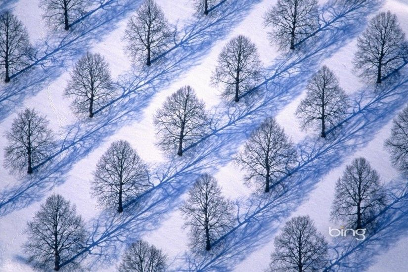 wallpaper.wiki-Trees-in-winter-snow-Background-PIC-