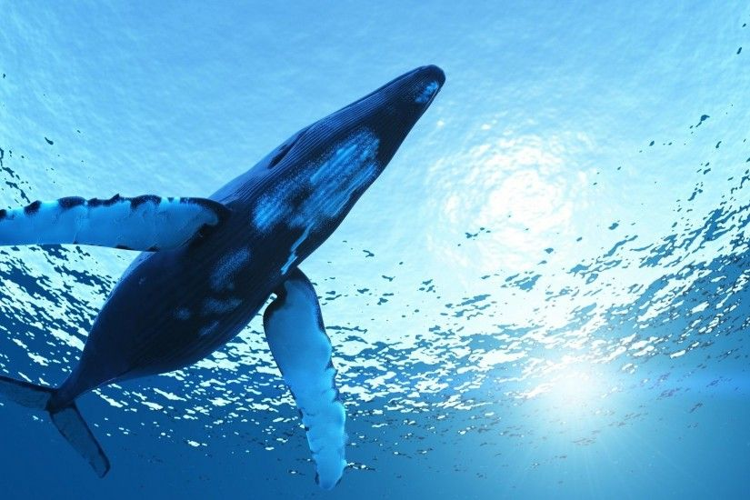 Whale Wallpapers | FHDQ Whale Wallpapers