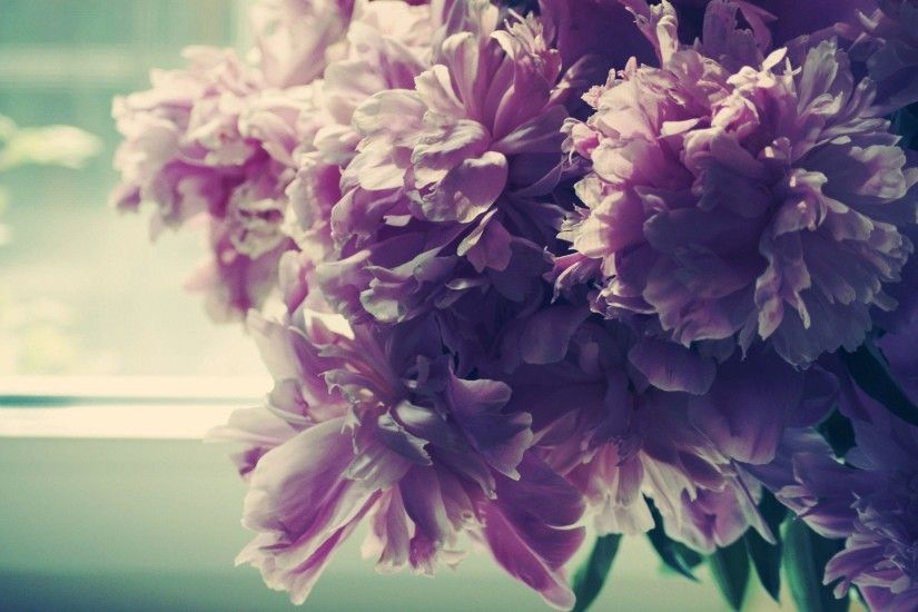 Peonies Wallpaper | Wallpaper Color