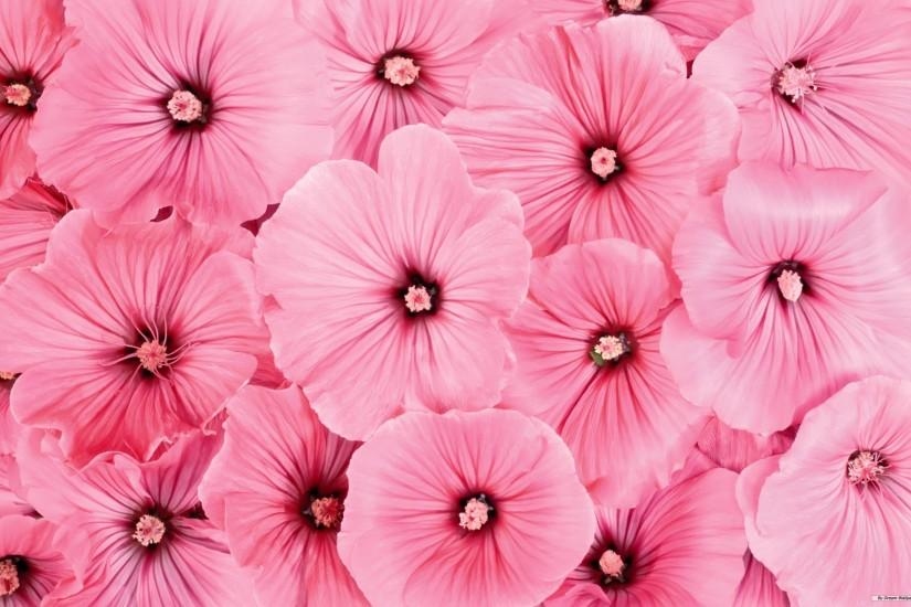 natural pink flowers background