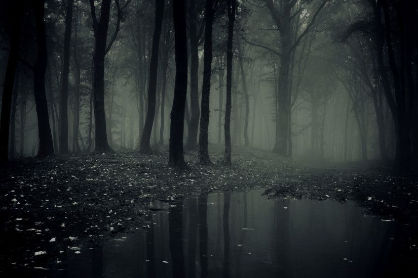 Download-Dark-Woods-Background-Free