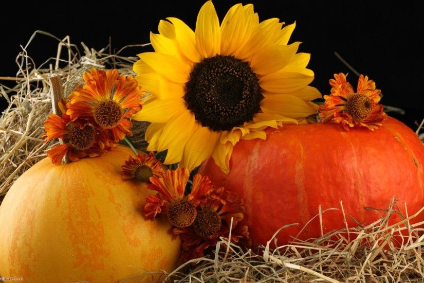 Sunflower and pumpkins - Free Desktop Wallpaper, HD Wallpapers .