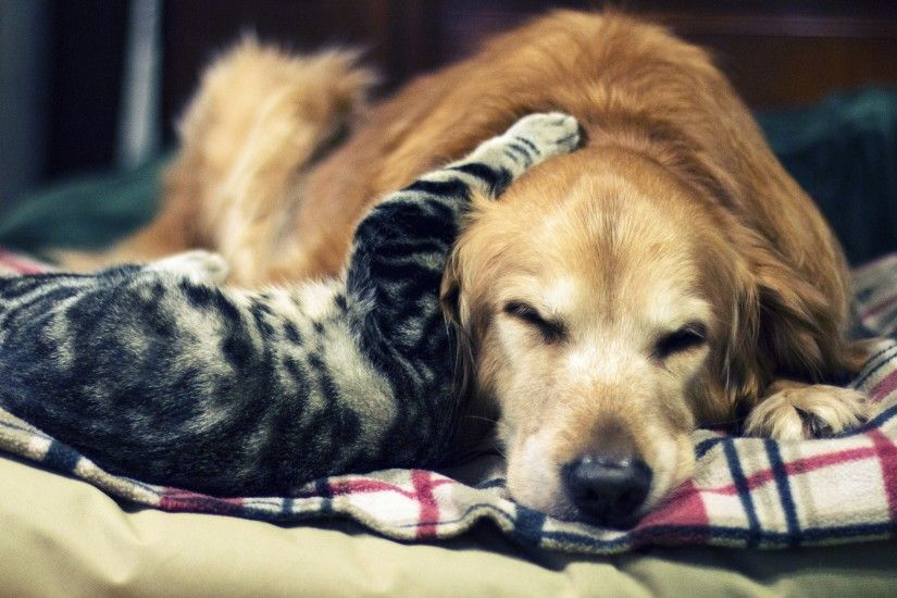 cute cat and dog 4k wallpaper for desktop