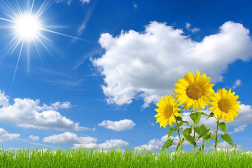 ... free sunflower wallpapers hd resolution long wallpapers ...