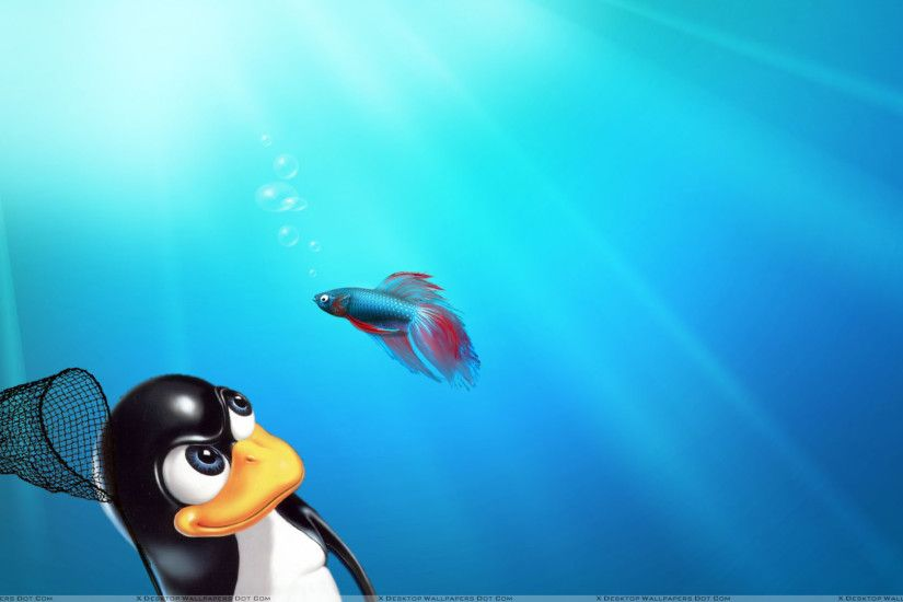 Linux Windows Wallpaper - WallpaperSafari