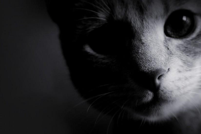 Wallpapers For > Black And White Cat Wallpapers