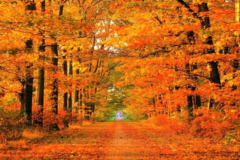 most popular fall wallpapers 1920x1080 for android 50