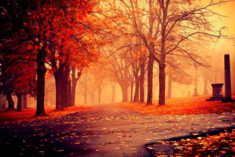 Fall Beautiful HD Wallpaper
